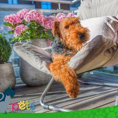 Feliz sábado ☀️  #PetsWorldMagazine #RevistaDeMascotas #Panama #Mascotas #MascotasPanama #MascotasPty #PetsMagazine #MascotasAdorables #Perros #PerrosPty #PerrosPanama #Pets #PetsLovers #Dogs #DogLovers #DogOfTheDay #PicOfTheDay #Cute #SuperTiernos