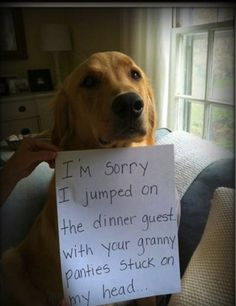 Hilarious dog shaming pic. For more great humor and funny pics visit www.bestfunnyjokes4u.com/lol-funny-cat-pic/