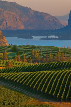 Blue Mountain Vineyards - Okanagan, British Columbia, Canada Premium wines delivered to your door. Get social. Calgary, British Columbia, Rocky Mountains, Places To Travel, Places To See, Parcs Canada, Beautiful World, Beautiful Places, Vancouver