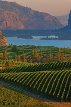 okanagan wineyards Curated by: BB MEDIA TEAM   #315 - 11605 227 St, Maple Ridge, BC V2X 2L6 Canada   866-417-0035
