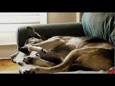 Os cães sonham? • Guia Cão - Tudo sobre programas Dog Friendly | O melhor companheiro para o seu dia a dia!