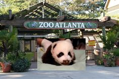 If you have kids (or even if you don't!), Zoo Atlanta is a really fun spot!