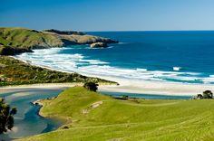 Allans Beach - Dunedin