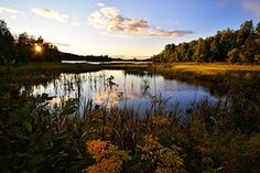 Landscape, Water, Lake, Nature, Marsh