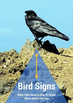 Bird Signs & Symbolism. Have you been seeing a lot of the feathered friends lately? Could be a sign you're getting more intuitive and becoming more relaxed. Birds like people they feel safe around, those who care for their community and other species who vocalize. Is that you? Contributing to bird song? Then read on...