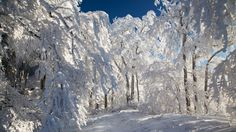 forest trail winter hd wallpapers download