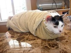 9. Un chat momifier dans sa serviette et un autre pas content du tout !