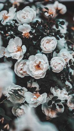 Vintage Flowers Wallpaper, Flower Iphone Wallpaper, Beautiful Flowers Wallpapers, Iphone Background Wallpaper, Pretty Wallpapers, Aesthetic Iphone Wallpaper, Aesthetic Wallpapers, Hd Flowers, Pastel Flowers