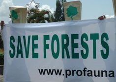 Deforestation in Borneo, a Time Bomb Waiting to Explode | ProFauna Indonesia