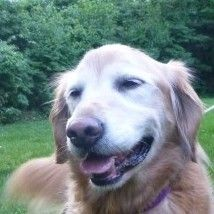 This is Kianti - 8 yrs. She is spayed, current on vaccinations, potty trained, has good house manners, good with dogs. Needs leash work. GRRAND, KY. - http://grrand.org/kianti-needs-a-home/