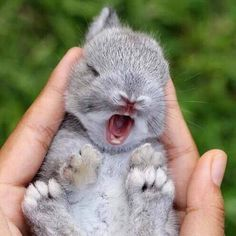 This Cutie Baby Animal Bring You a Good Mood