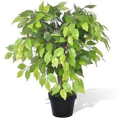 #Artificial #plants trees #wedding decor living room fake #plant flowers ficus 60 ,  View more on the LINK: 	http://www.zeppy.io/product/gb/2/221909789284/