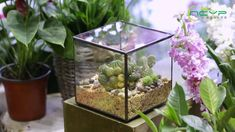 geometric  terrariums Terrarium Containers, Glass Terrarium, Terrariums, Floating Frame, Air Plants, Urn, Container Gardening, Diys, Flora
