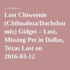 Lost Chiweenie (Chihuahua/Dachshund mix) Gidget – Lost, Missing Pet in Dallas, Texas Lost on 2016-03-12