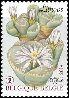 Sello: Lithops - Living Stones (Bélgica) (Fantastic Flora) Mi:BE 4440,Sn:BE 2684b,Yt:BE 4374,AFA:BE 4473,Bel:BE 4394