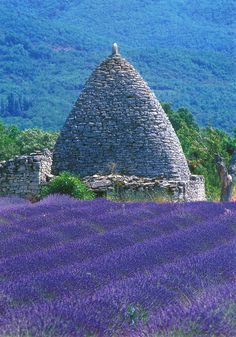 Lavender field in Provence ♥ღ www.myvintagecameras.com