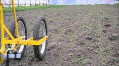 Désherbage de semi avec houe maraichere / Cultivateur à dents