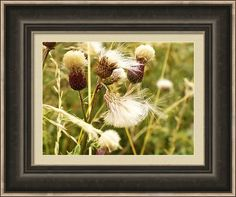 Framed Print featuring the photograph Blowing Away by Judi Saunders.