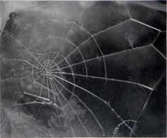 "Vija Celmins, Spider Web, 2009, 17.36x19"", artnet Auctions est. $3,000 - $5,000."