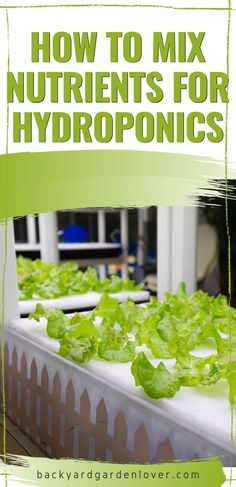 If you wonder how to mix nutrients for your hydroponic garden, you'll love these simple step by step tips. You'll be able to keep a healthy and potent nutrient reservoir in your grow room. #hydroponicgarden #hydroponicnutrients #hydroponics #hydroponictips Hydroponic Gardening, Hydroponics, Container Gardening, Gardening Tips, Vegetable Gardening, Backyard Farmer, Long Term Food Storage, Grow Room, Healing Herbs