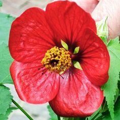 #Longwood #LongwoodGardens #Summer #Garden #Flower #Flowers #Plant #Plants #Pretty #Beauty #Beautiful #Outside #Nature #MotherNature #Green #Red