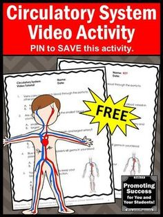 FREE Human Body Circulatory System Activities Video and Worksheet Science Biology