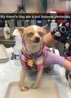 """13 Hilarious Doggo Snaps That'll Get Your Tail Wagging - Funny memes that """"GET IT"""" and want you to too. Get the latest funniest memes and keep up what is going on in the meme-o-sphere. Funny Animal Jokes, Really Funny Memes, Cute Funny Animals, Stupid Funny Memes, Funny Relatable Memes, Haha Funny, Funny Cute, Funny Dogs, Hilarious"""