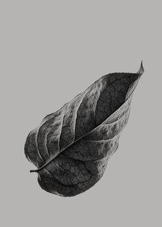 Sabi Leaves