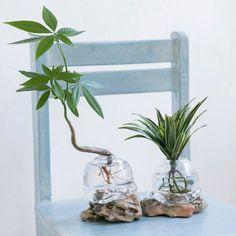 観葉植物 おしゃれまとめの人気アイデア Pinterest May 2020