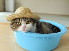 just sittin' in a bowl....wearin. a hat...  when does winter end?