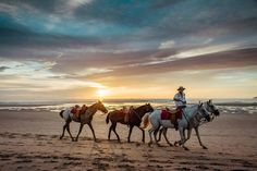Caballero cowboy riding his horses on the beach during sunset in Costa Rica. sunset, sunsets, beach sunset, sunset ocean, sunset photography, sunset pictures, sunset sky, sunset beautiful, sunset background, Cielo atardecer, sunset sea, sunset pastel, sunset beach surf, sunset beach tropical, sunset Costa Rica, sunset beach waves, sunset beach photography, sunset beach wanderlust, beach horse, horseback sunset, horseback riding sunset, horseback riding beach, horseback riding beach