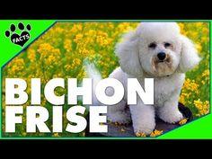 Gifts Dogs BICHON FRISE Plastic Street Signs: BICHON BLVD