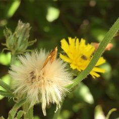 Fleurs du jardin #fleur #flower #jardin #naturelovers #nature #botanique #botanic #biodiversite #biodiversity #garden