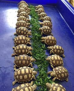 344 Best Turtles Lovers Collection images in 2018 | Sea