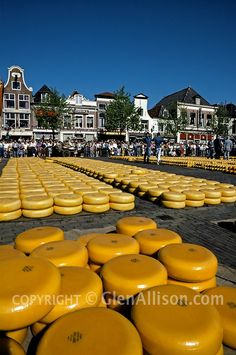 Netherlands, Holland, Alkmaar, outdoor cheese market, Glen Allison.