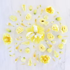 Digital Blooms May 2017   Free Desktop Wallpapers // JustineCelina.com x Rebecca Dawn Design