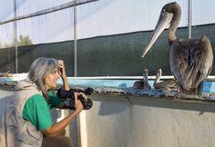 I Dream of Gigi | Audubon Magazine