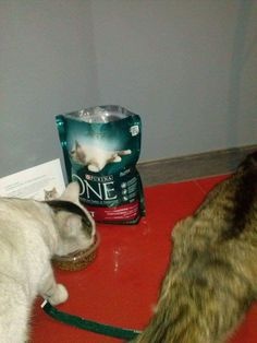 :) #PurinaONE #PurinaONEadult #wyzwaniePurinaONE https://www.facebook.com/photo.php?fbid=1685123121755703&set=o.145945315936&type=3&theater
