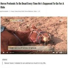 Hilarious Tumblr Posts About Horses That Are Worth To Read #funny #picture
