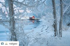 #Repost @natgeo  Photo by @haarbergphoto (Erlend Haarberg) In cold periods sea fog develops along the coast of Norway and covers the landscape with a thick coat of hoarfrost. Inderøy Straumen Norway.  Follow @haarbergphoto to see more winter images from our travels in the Nordic countries. #norway #straumen @thephotosociety @natgeocreative by 99repost