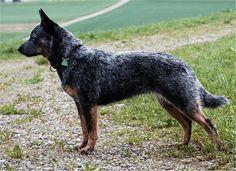 How to Train an Adult Dog -- via wikiHow.com