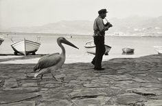 Rene Burri Le Pelican de Mykonos, Greece - May 2011 Mykonos Island, Mykonos Greece, Athens Greece, Greece Photography, Street Photography, Vintage Photography, White Photography, Magnum Photos, Old Pictures