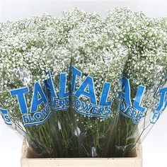 Gypsophila Million Stars, also known as Baby's Breath, is a White cut flower - commonly used in the floristry trade to create a softening effect because of the numerous, tiny flower heads on each stem. It is approx. 70cm and wholesaled in Batches of 25 stems.