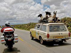 traveling llamas