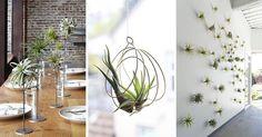 décoration d'intérieur en plantes sans terre - osez les tillandsias pour…