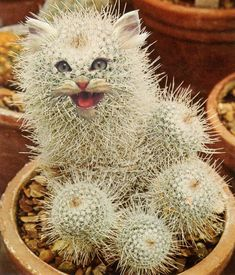 Chicago-based artist Stephen Eichhorn makes surprising collages, drawing inspiration from houseplant guides and books about cats Cactus Cat, Cat Plants, Beautiful Collage, Contemporary Photography, Photo Manipulation, Cat Memes, Cute Cats, Bird, Drawings
