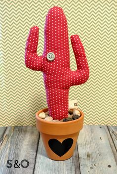 sal i oli: Regala un cactus per sant valentí!