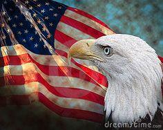 Bald Eagle with American Flag | ... Southern bald Eagle looking at American flag. Eagle is on outer Layer