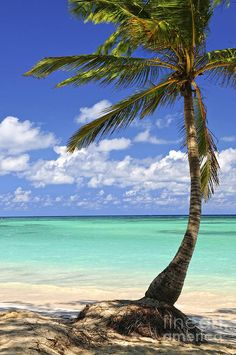 ✮ Sandy beach of a tropical island with palm tree