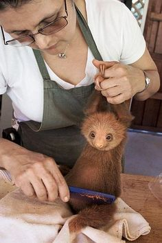 I can't go out today, I'm freshening my sloth. I can't go out today, I'm freshening my sloth. Cute Little Animals, Cute Funny Animals, Cute Dogs, Cute Baby Sloths, Cute Sloth, Baby Animals Pictures, Cute Animal Pictures, So Cute Baby, Cute Babies